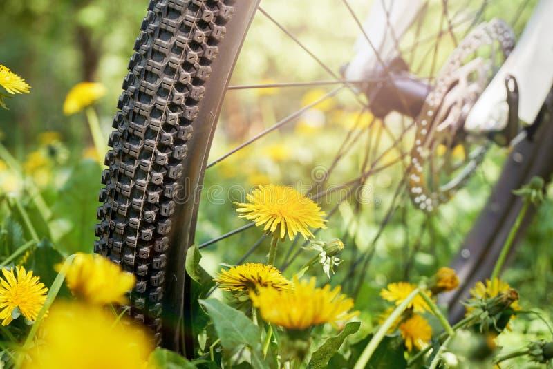 Конец колеса велосипеда вверх стоя на луге вполне blossoming одуванчиков и освещенном лучами солнца стоковое изображение