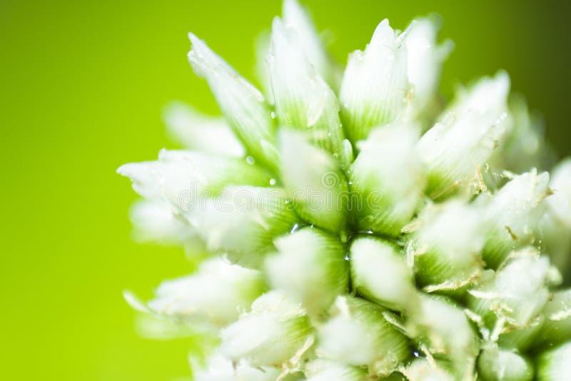 Конец крайности цветка травы вверх стоковое изображение rf