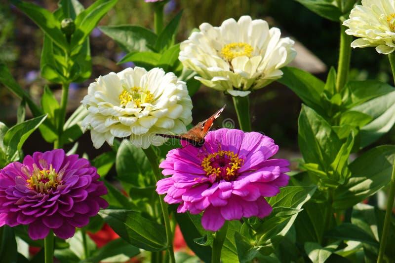 конец красит лето фото света сада цветков естественное вверх стоковая фотография