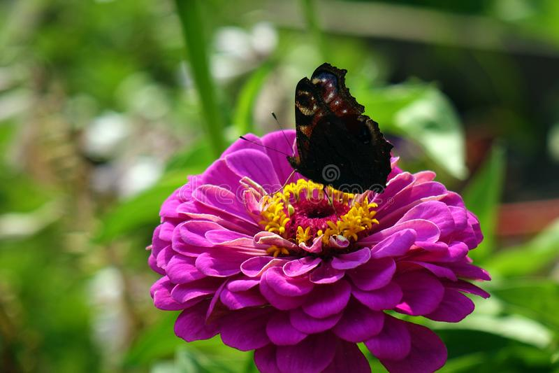 конец красит лето фото света сада цветков естественное вверх стоковая фотография rf