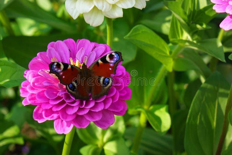 конец красит лето фото света сада цветков естественное вверх стоковое изображение