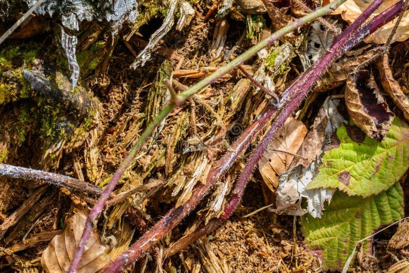 Конец предпосылки текстуры вверх заводов и флоры леса стоковая фотография
