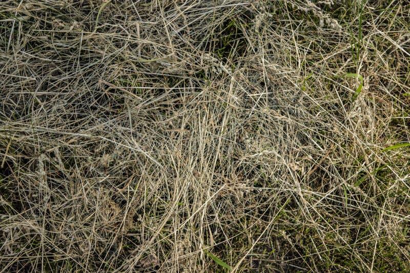 Конец природы сена сухой травы органический вверх стоковая фотография