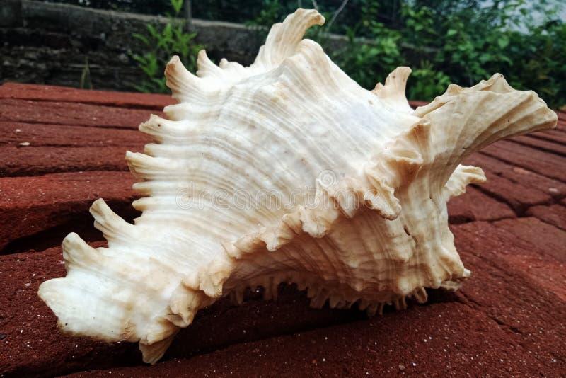 Конец раковины моря вверх на кирпиче предпосылка, обои стоковое фото rf