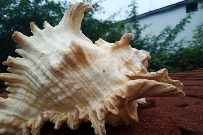 Конец раковины моря вверх на кирпиче предпосылка, обои стоковые фотографии rf