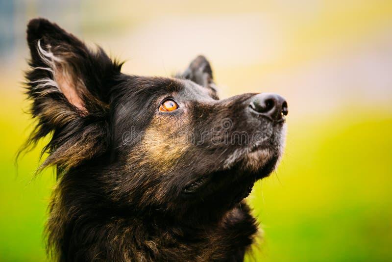 Конец собаки немецкой овчарки вверх стоковые изображения rf