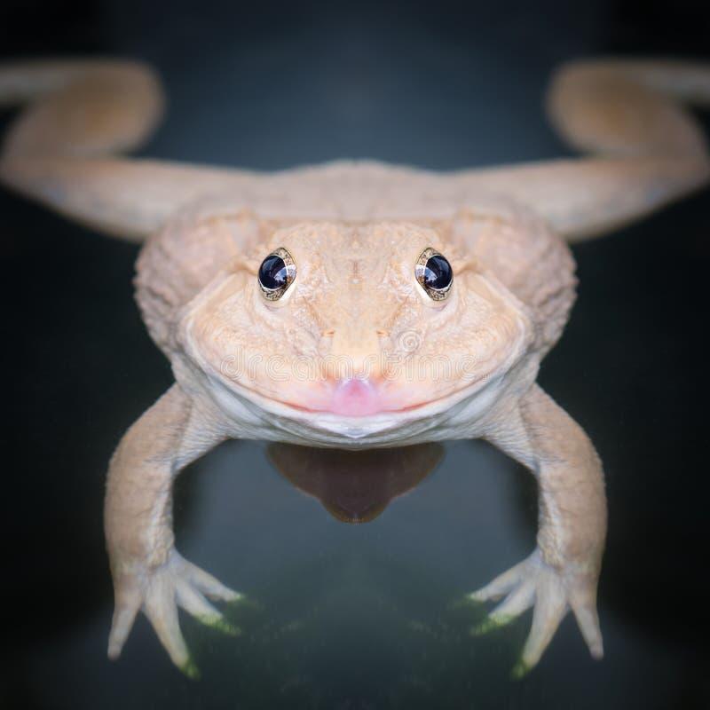 Конец стороны лягушки вверх стоковые изображения rf