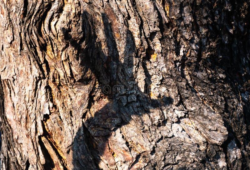 Конец текстуры дерева вверх с другой предпосылкой руки Концепция естественная легко разрушена из-за человека стоковые фото