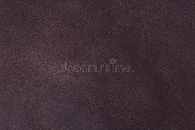 Конец текстуры конспекта фиолетовый естественный кожаный вверх, для использования предпосылки стоковые фотографии rf