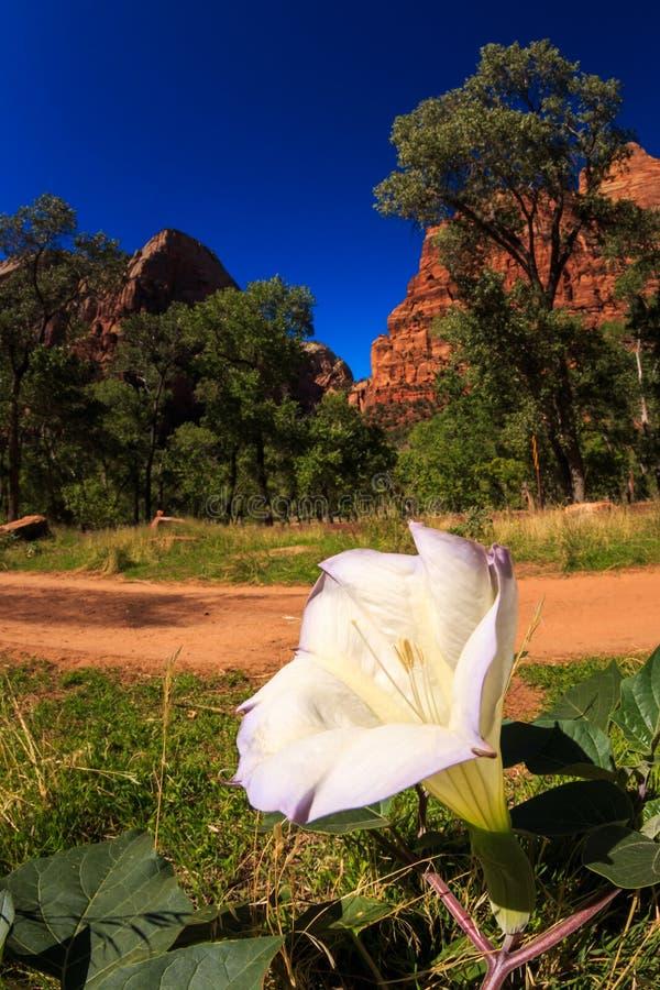 Конец цветка национального парка Сиона вверх стоковые фотографии rf