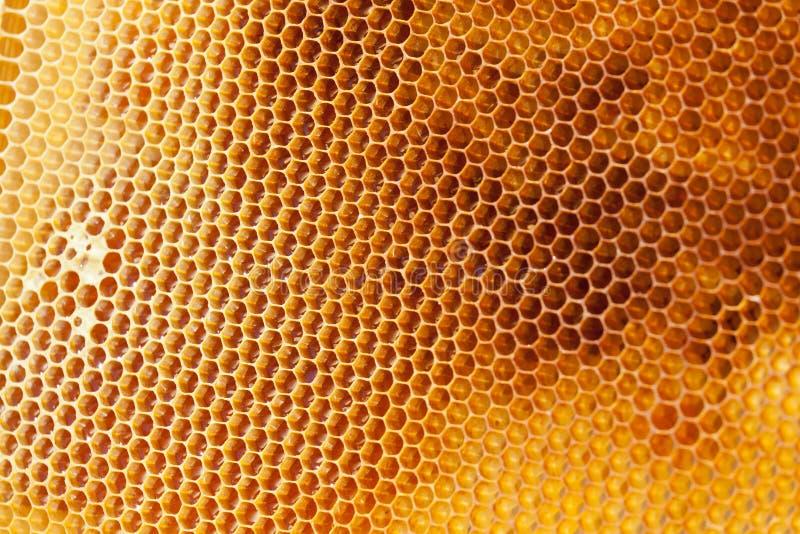 Конец med пчелы заполненный сотами вверх стоковые фотографии rf