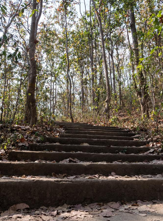 Конкретная лестница естественного следа стоковое фото