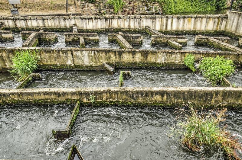 Конкретная лестница рыб стоковое изображение