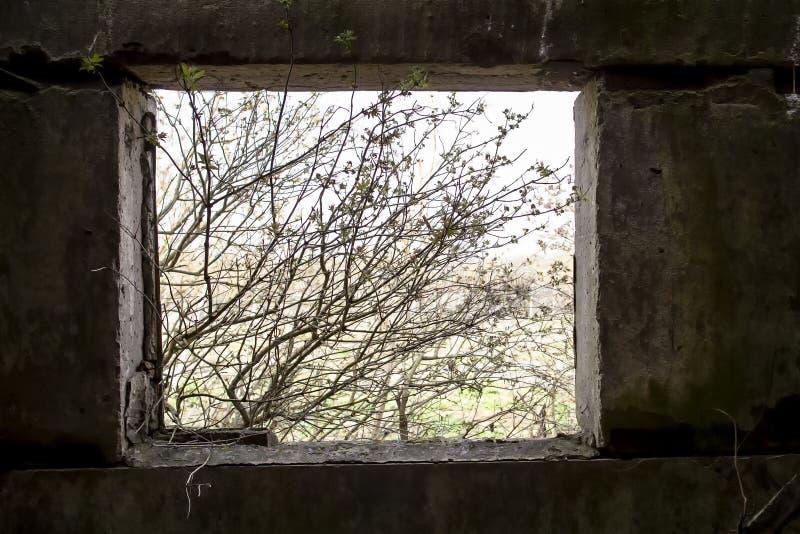 Конкретное отверстие окна в покидать, перерастанный с кустарниками и хмурыми сельскохозяйственными строительствами в сельской мес стоковая фотография rf
