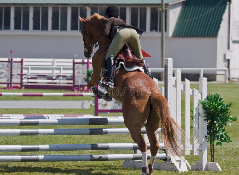 Конноспортивная лошадь showjumping стоковое фото