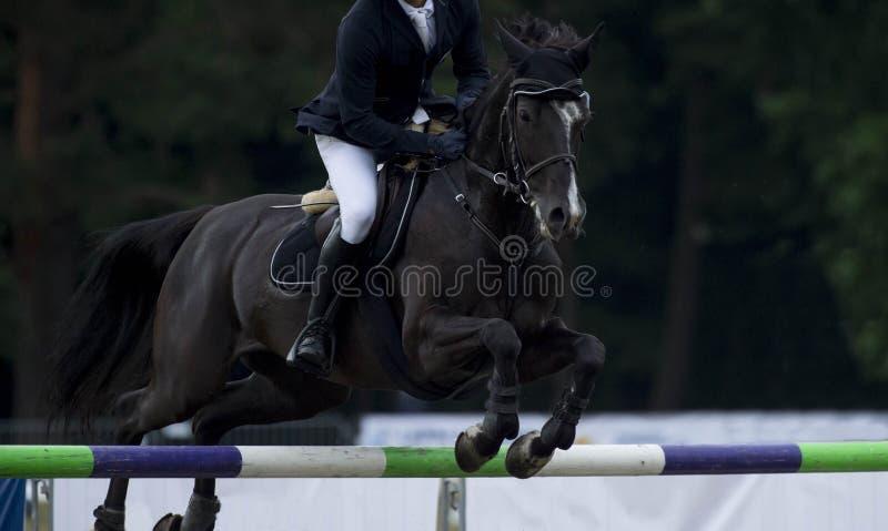 Конноспортивные спорт, лошадь скача, шоу скача, верховая езда стоковые изображения rf
