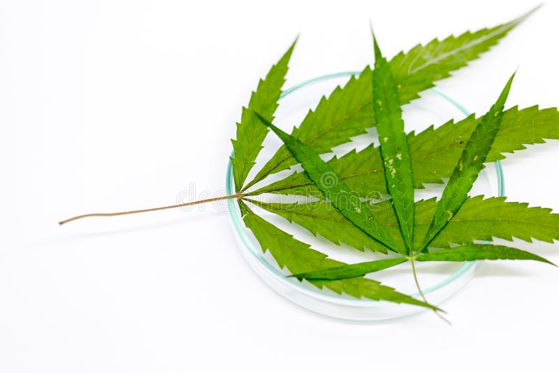 Анализ конопли в моче как курить марихуану дома