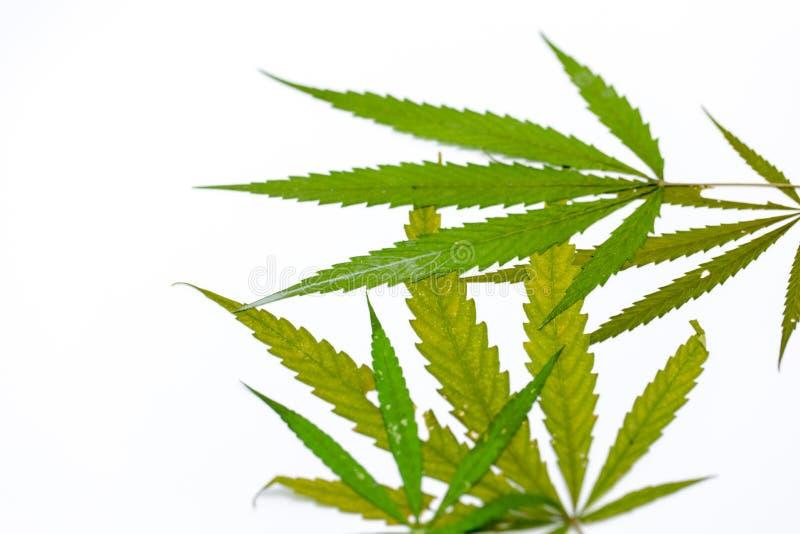 легализация марихуаны вашингтон