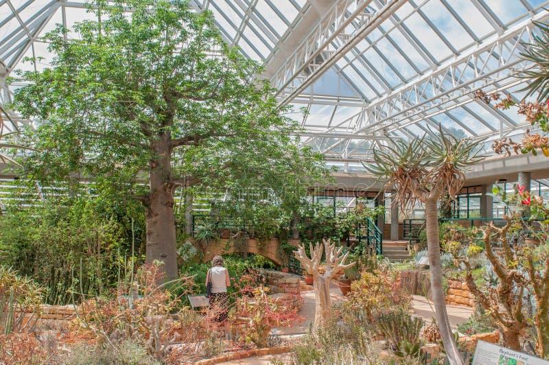 Консерватория на саде Kirstenbosch национальном ботаническом стоковые изображения rf