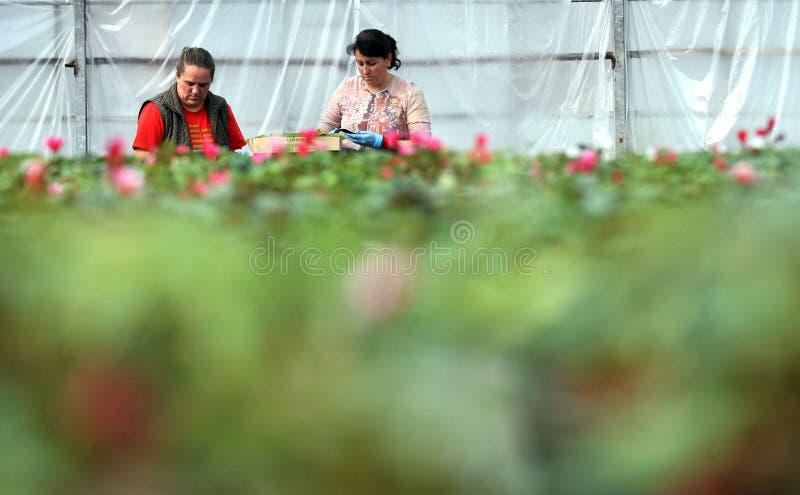 Консерватория цветков стоковое фото