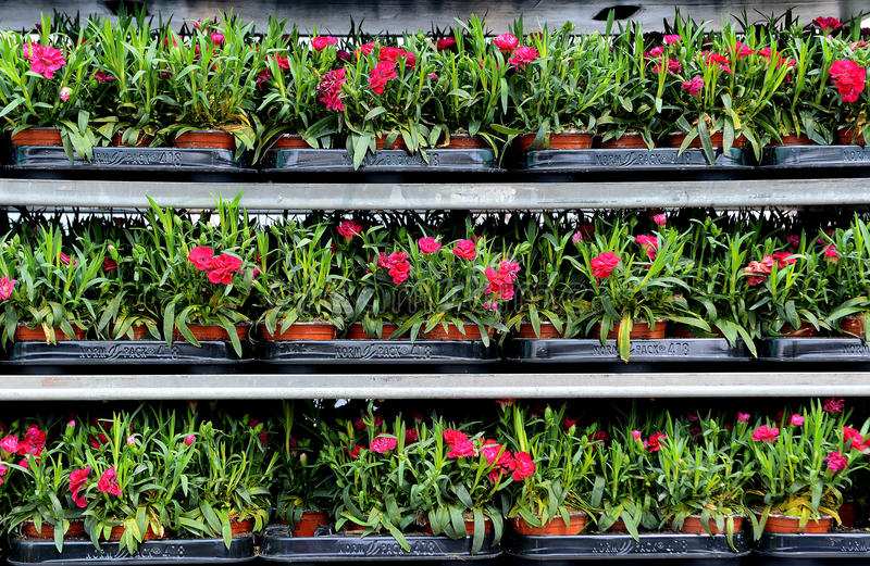 Консерватория цветков стоковые изображения rf