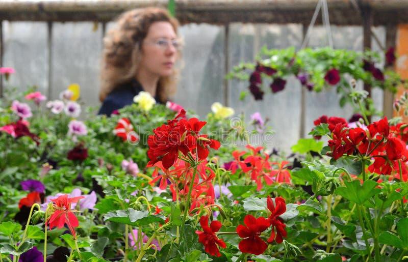 Консерватория цветков стоковое изображение rf