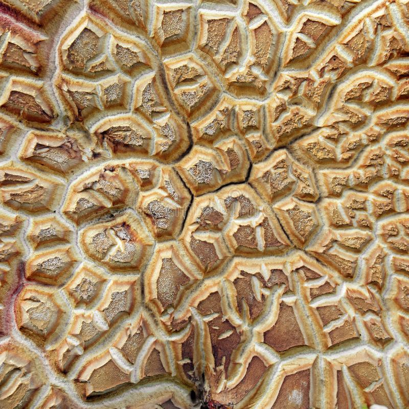 Конспект гриба стоковое фото rf
