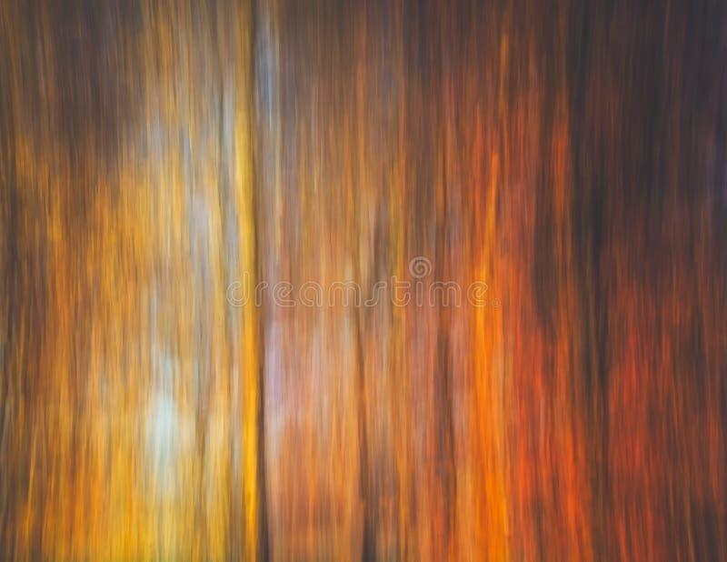 Конспект леса стоковое изображение