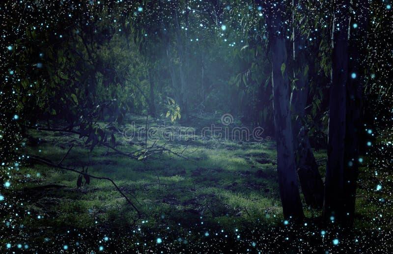 Конспект и волшебное изображение летания светляка в концепции сказки леса ночи стоковые фотографии rf