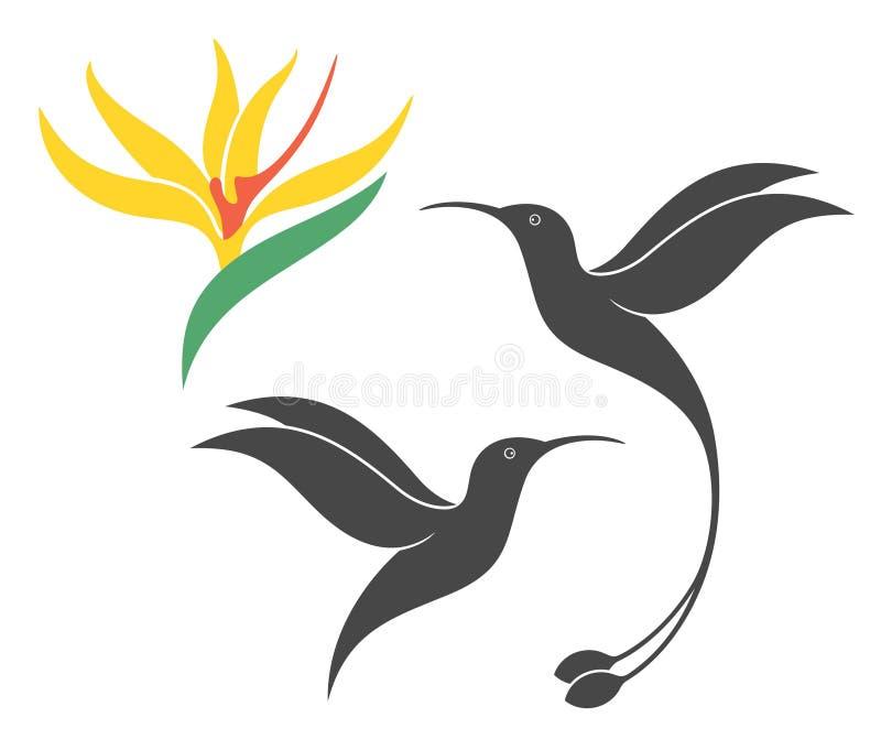Конспект колибри иллюстрация штока