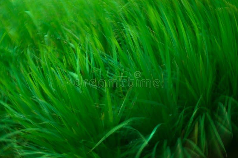Конспект свежей зеленой травы стоковые фото