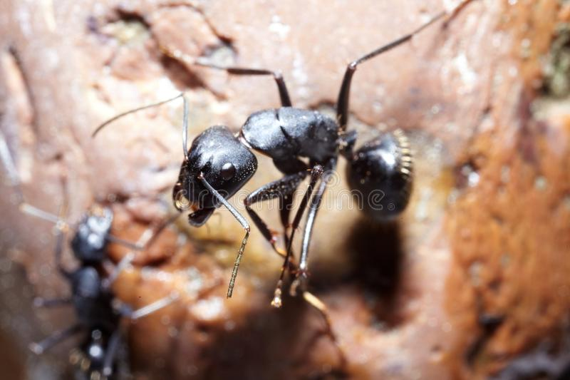 Конспирация 2 муравеев стоковая фотография rf