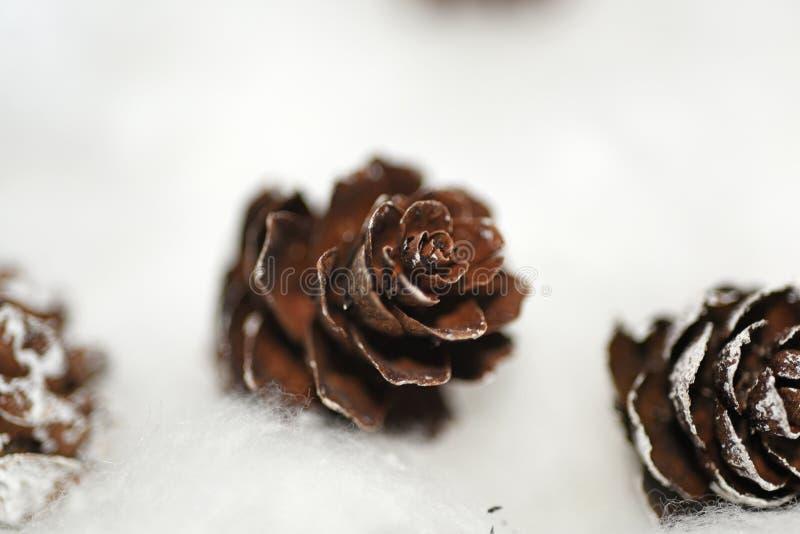 Конусы в снеге стоковые изображения rf