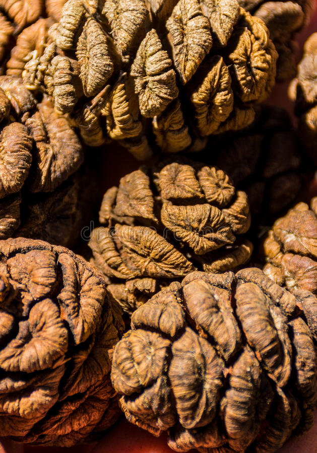 Конусы дерева гигантской секвойи, гигантского леса, Калифорнии США стоковые изображения