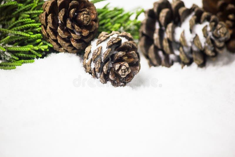 Конусы и лист сосны на предпосылке снега с космосом экземпляра стоковые изображения rf