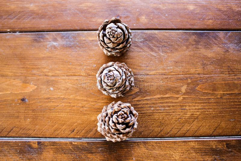 Конусы Пуны от сибирское sedar стоковые фотографии rf