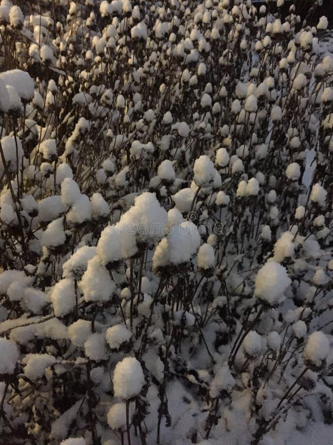 Конусы снега стоковые фото