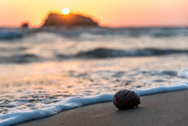 Конус сосны на песчаном пляже стоковое изображение