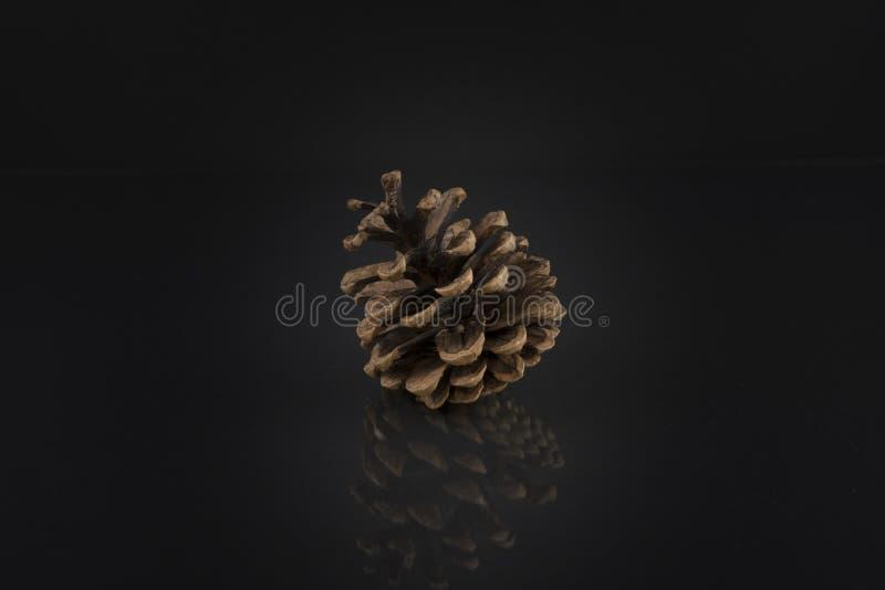 Конус сосны на черноте Художественное фото конуса сосны стоковые изображения rf