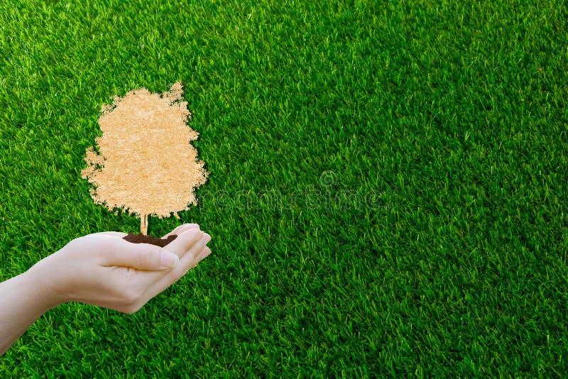Концептуальный документ экологичности отрезал человеческие руки держа большое дерево завода с на мировой окружающей средой стоковая фотография