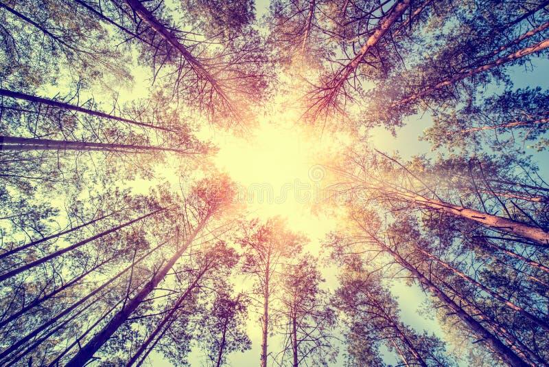 Концепции леса стоковое фото