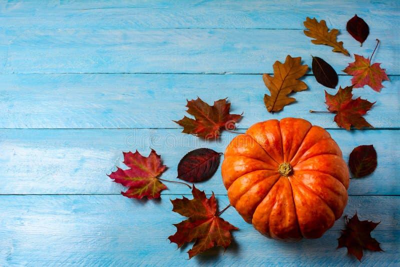 Концепция благодарения с зрелой тыквой на голубой деревянной предпосылке стоковое изображение