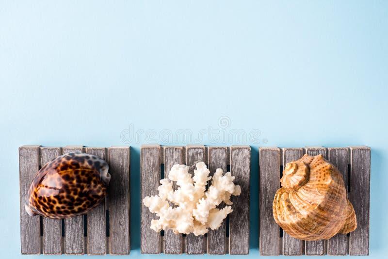 Концепция временени с раковинами моря на голубой предпосылке стоковые изображения rf
