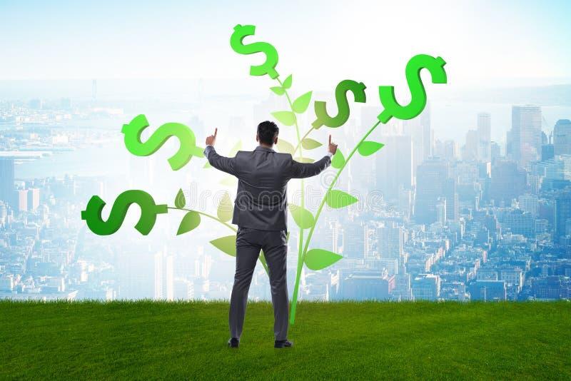 Концепция дерева денег с бизнесменом в растя выгодах стоковая фотография