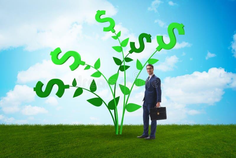Концепция дерева денег с бизнесменом в растя выгодах стоковые изображения