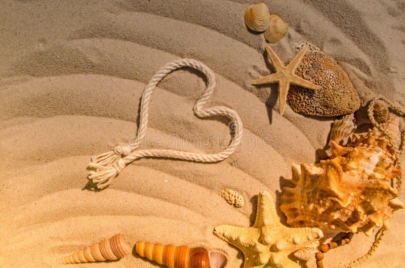 Концепция лета с морскими звёздами и seashells стоковое фото rf