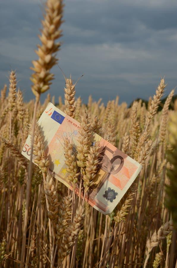 Концепция дела земледелия - банкнота евро на зрелых ушах пшеницы конца лета стоковое изображение rf
