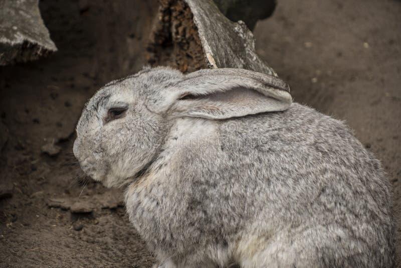 Концепция зайчика пасхи Малый милый кролик стоковое изображение rf
