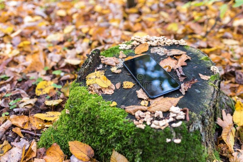 Концепция - затишье осени, телефон на пне в середине леса осени стоковые изображения
