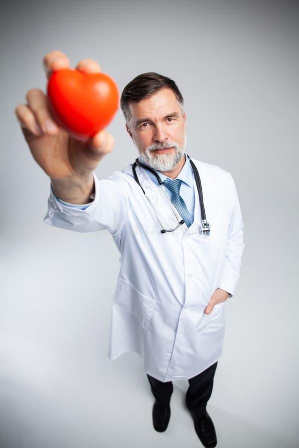 Концепция здравоохранения и медицины - зрелый доктор держа красное сердце стоковые изображения
